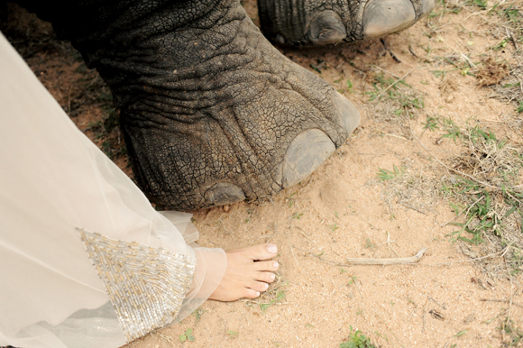 South-Africa-intimate-wedding-elephants-SarahMariePhotos-27